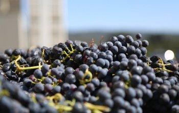 Domácí degustace vín - Pozdní sběry + bedna šesti…