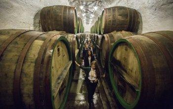 Škola čepování piva Pilsner Urquell + prohlídka…