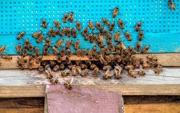 Apiterapie: Včelí terapie v sauně, masáž a…